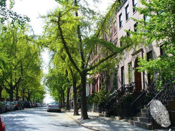 Поздрави от зелен Ню Йорк